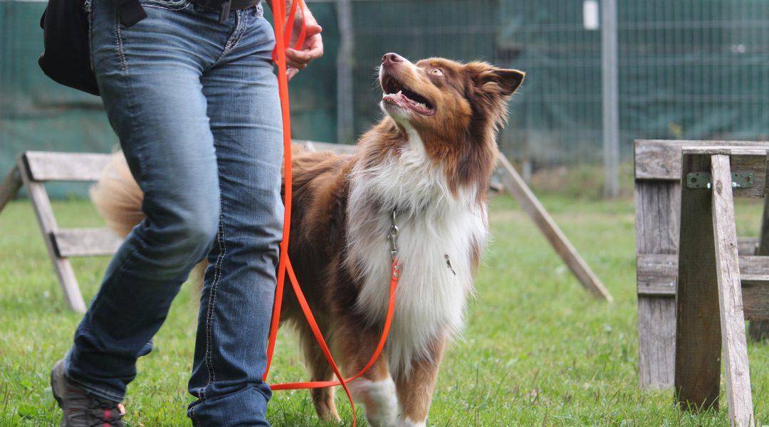 SEMINAR | Wenn der Hund vorne läuft | 9. bis 11. August 2019