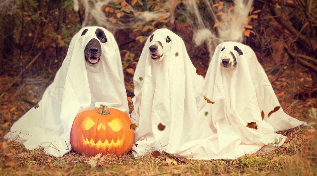 MONATSANGEBOT | Halloween | 31. Oktober 2019