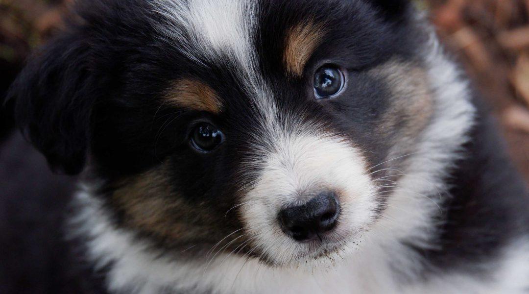 THEMENABEND   Entwicklungsphasen des Hundes   17. Juli 2020